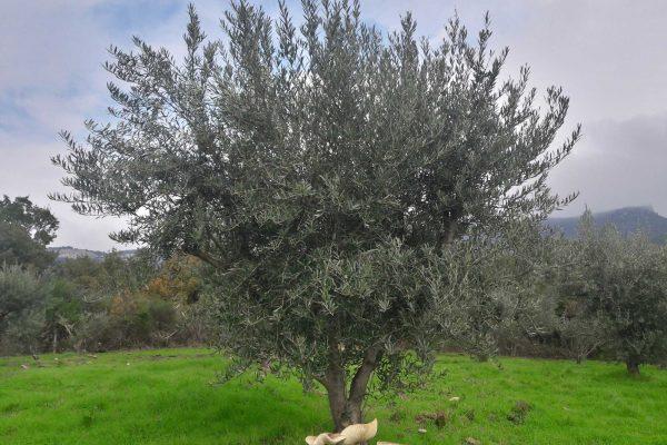 coulmelle-et-olivier